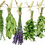 Cursos de naturopatia online y flores de california